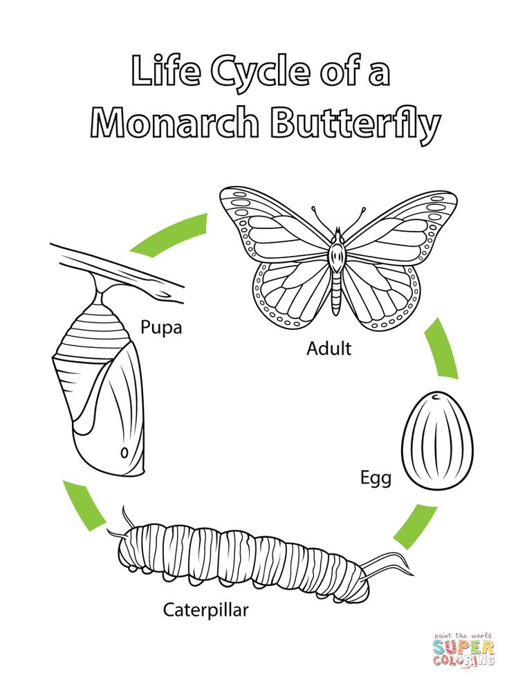 Life Cycle of a Monarch Butterfly coloring page from