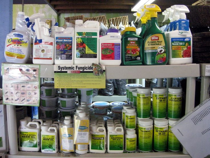 world's No.1 orchid supplier-Green Barn Orchid Supplies