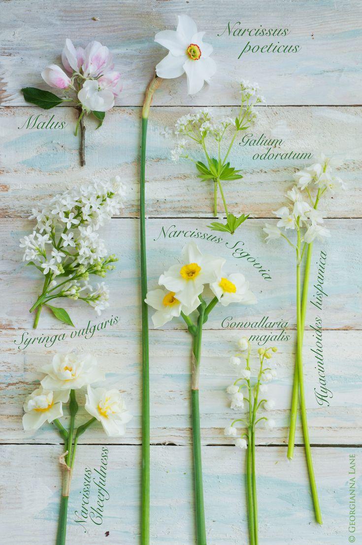 Photo by Georgianna Lane - spring whites