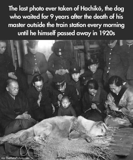 Hachiko.  The purest and most extreme example of canine love, loyalty, & devotion.....