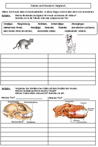 skelett von hund katze pferd unterricht hund und katze hunde skelett und katzen. Black Bedroom Furniture Sets. Home Design Ideas