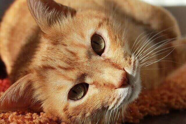 Knows1 نكت تحشيش احلى نكت تحشيش نكت تحشيش سورية Cat Care Cats Pets Cats