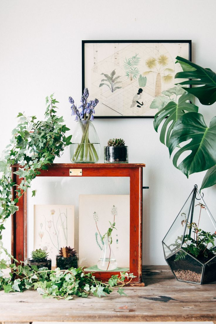 Vegetal urban jungle