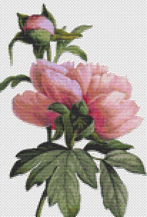 Counted Cross Stitch PATTERN Flowers by Pierre Joseph Redoute, Cross Stitch…
