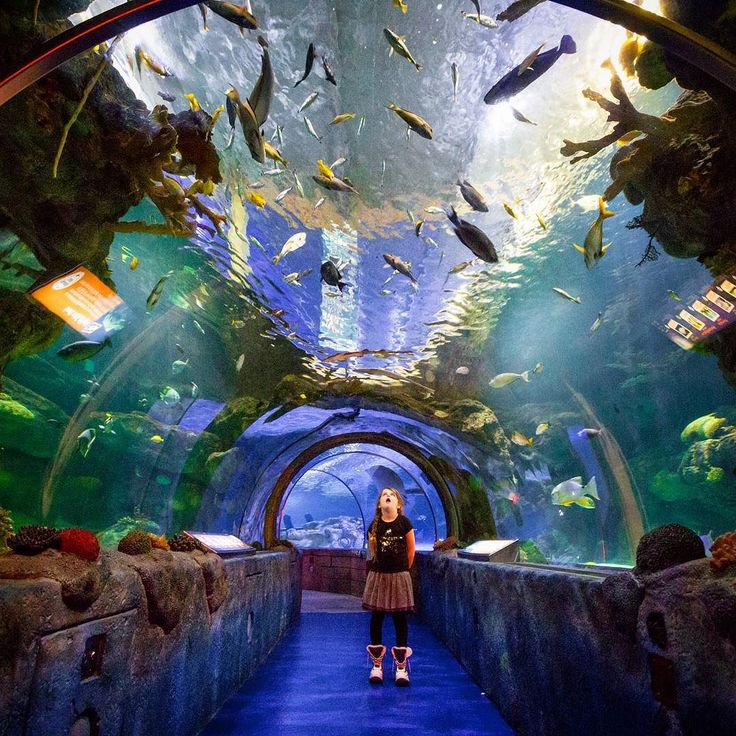 Staring at the sea life in Sea Life aquarium located within @mallofamerica Bloomington Minnesota... America's largest mall.  _  #moa  #sealife