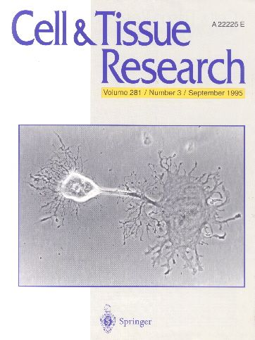 Публикации в журналах, наукометрической базы Scopus  Cell and Tissue Research #Cell  #Tissue #Research #Journals #публикация, #журнал, #публикациявжурнале #globalpublication #publication #статья