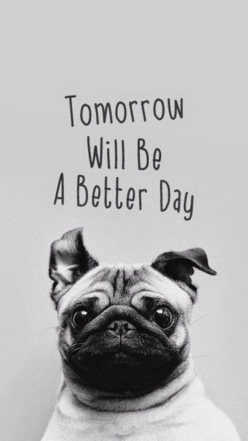 Tomorrow Will Be A Better Day Pug Android wallpaper thumbnail
