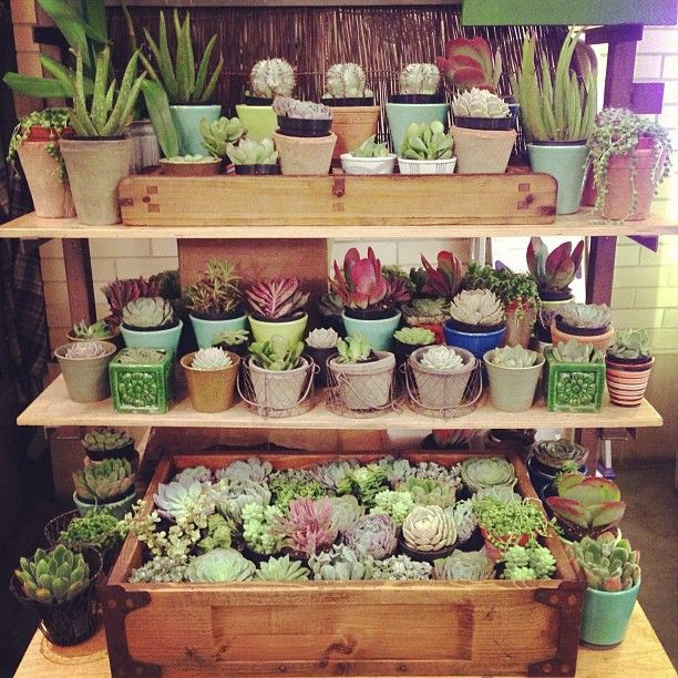 132 best Terrariums Succulents Cactus images on Pinterest