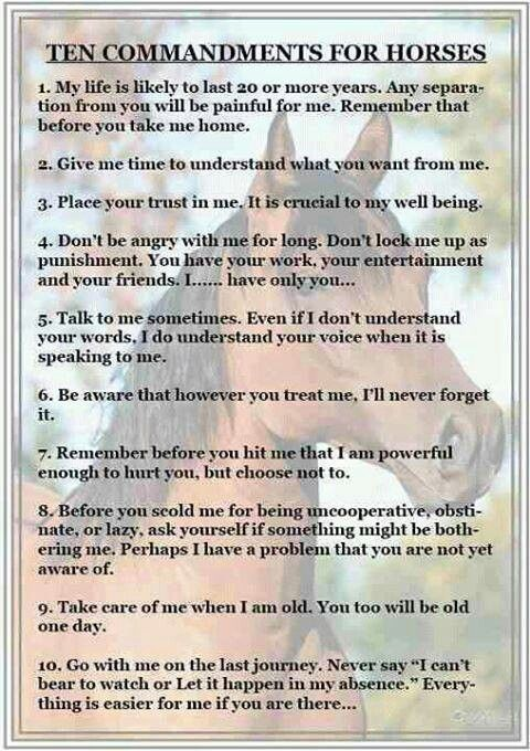 The 10 Commandments of the Horse