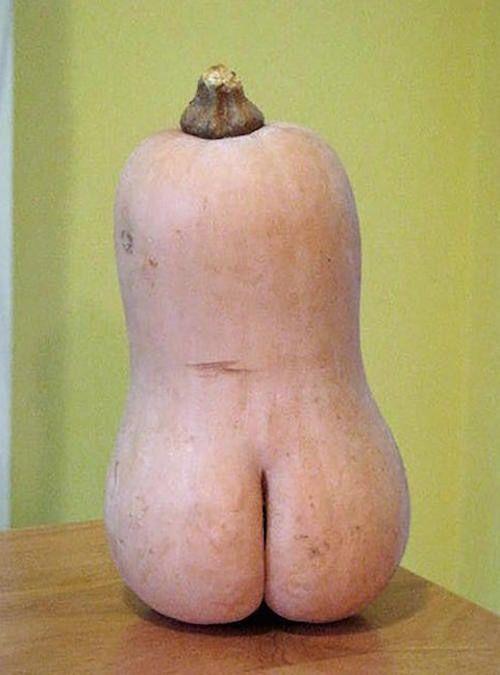 1bfdef60da0f00b54845ac9a449c0019--butternut-squash-walmart-humor.jpg