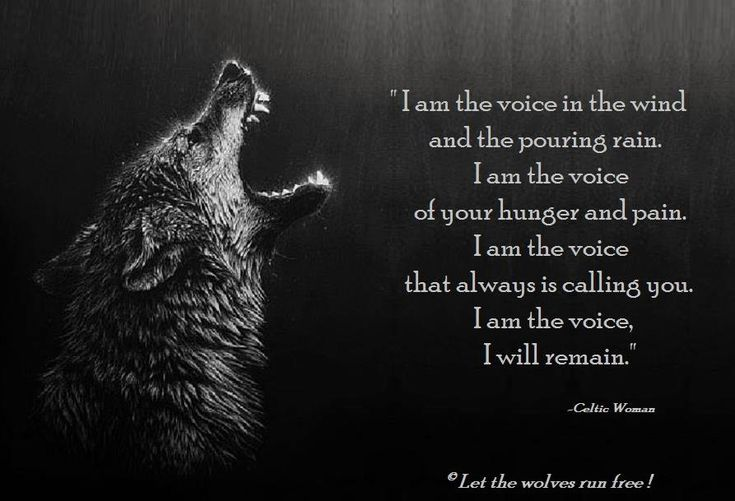 the wolf vocalization Links the publications warehouse does not have links to digital versions of this publication at this time download citation as: ris | dublin core abstract additional publication details.