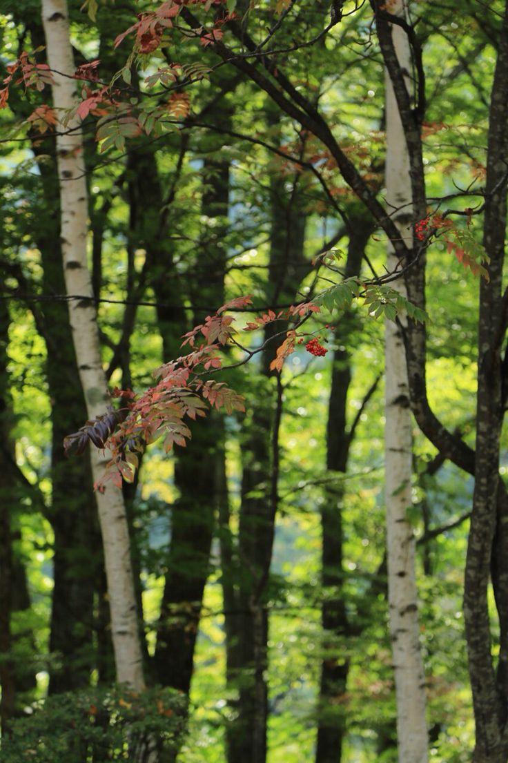 2014-10-12  西沢渓谷  紅葉前の西沢渓谷に初めて行って来ました〜♪  お天気に恵まれて、キラキラ光る森でリフレッシュ。滝の音が心地よかった♡