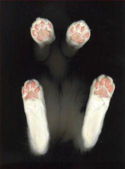 Kitten toes in da air