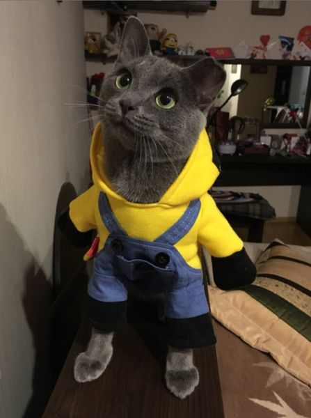 FREE WORLDWIDE SHIPPING ON THIS ITEM! This hilarious minions costume is adorable in person and will make your cat and dog look adorable. Available in many sizes