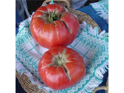 Mortgage Lifter Tomato- 85 days. Large, smooth, 1-lb. pink fruit have a delicious, rich, sweet taste. UF extension recommended for south/central Florida