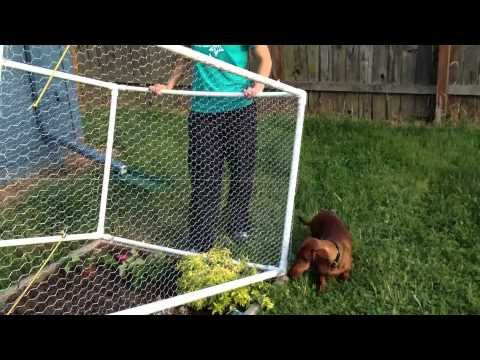 Awesome PVC fence to keep critters out of the garden. Fences lifts out of the way to all access.