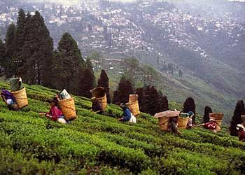 Darjeeling, India. Famous for its glorious tea! Wonderful place to vacation.