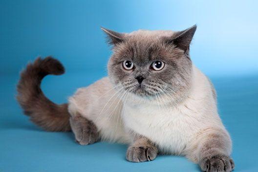 Czy koty trzeba kąpać?