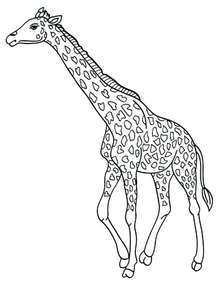 real giraffe coloring pages - photo#8