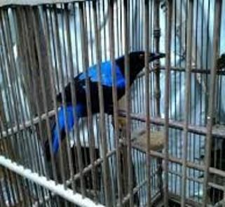 Download Kicau Burung Cucak Biru, Download Kicau Cucak Biru, Download Mp3 Kicau Burung Cucak Biru, Download Mp3 Kicau Cucak Biru, Download Mp3 Suara Burung Cucak Biru, Download Mp3 Suara Cucak Biru, Download Mp3 Suara Kicau