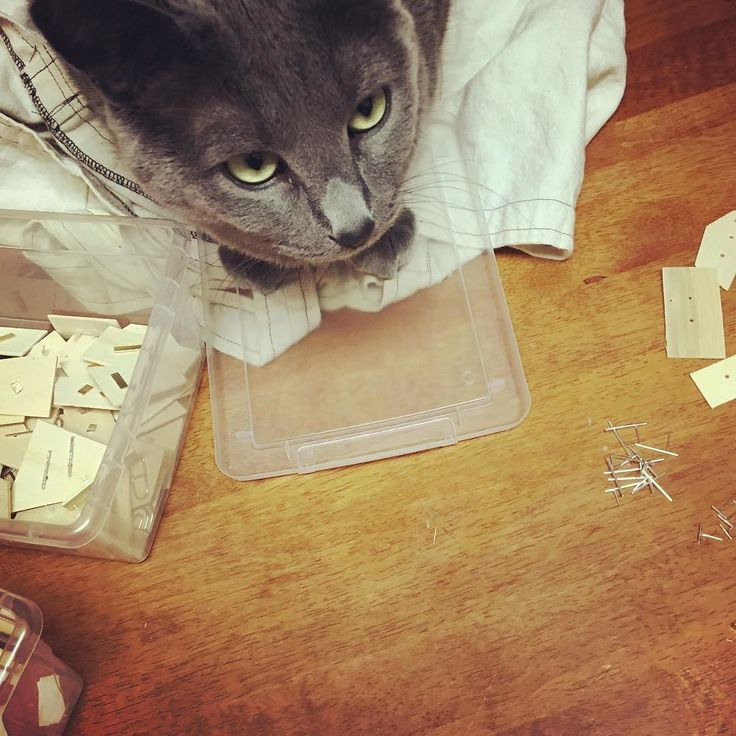 """Quality control supervisor for last minute assembling before I head off to HT at #UNBC! That face tho  """"it's way too early for this shit"""" #hunterandthistlefairs -E"""