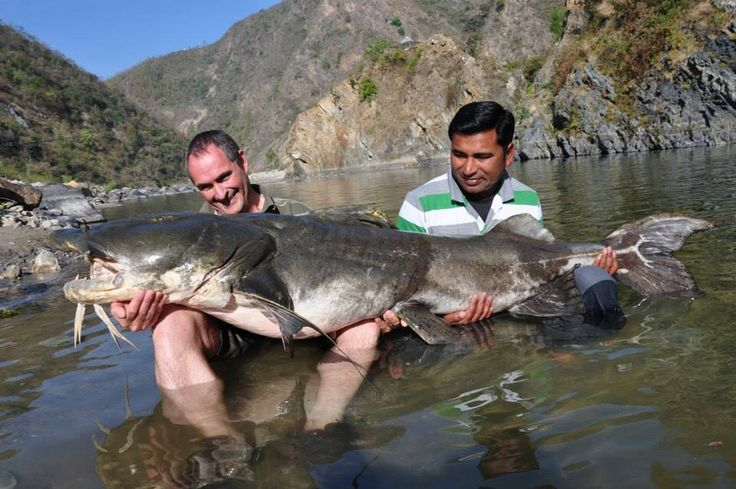 river monsters catfish goonch