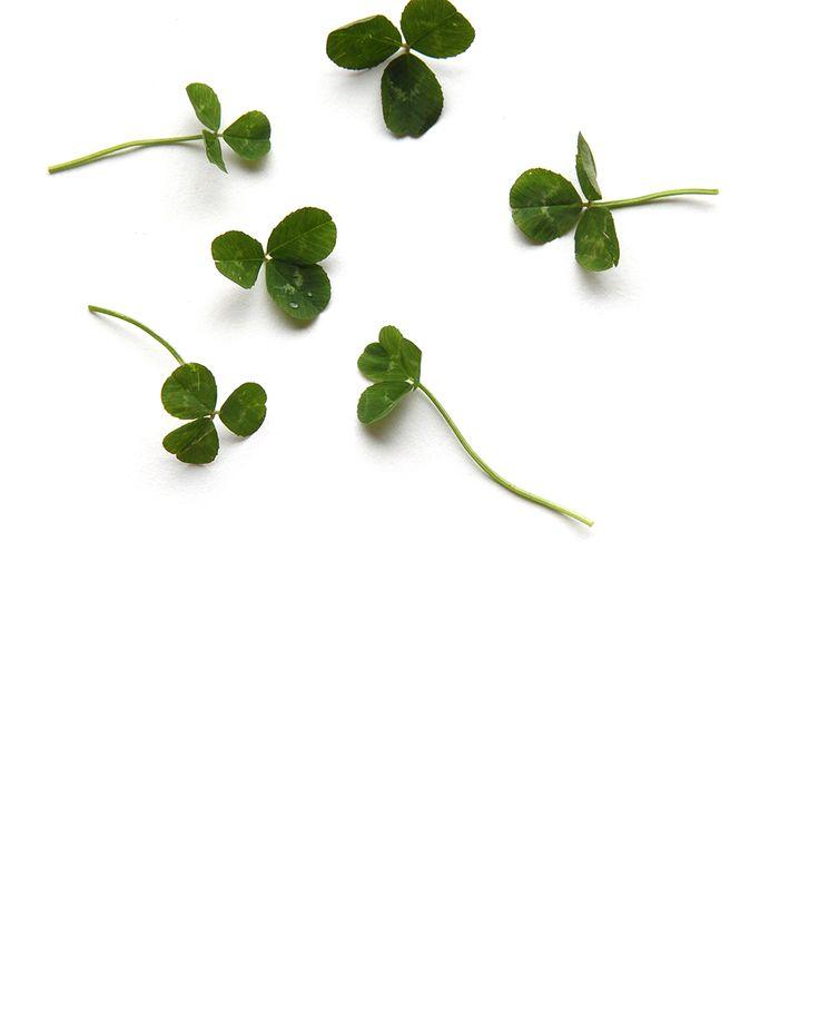 clover | STILL   (mary jo hoffman)