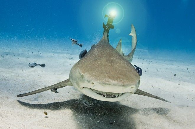 Dear Doctor Evil, Happy Birthday.    Finally, sharks with laser beams attached to their heads - http://www.wired.com/gadgetlab/2012/05/wicked-lasers-shark/