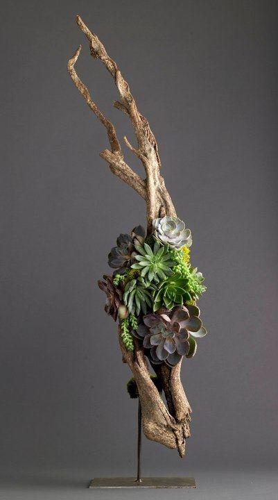 Miroir Bois Flotte Casa : Driftwood Succulent Arrangement
