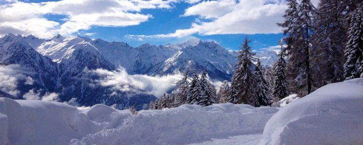 Neve , paesaggio , alberi .