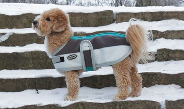THE NEWMARKET (BLS0212) Step out in style with the distinguished Newmarket Dog Coat in the fashionable striped pattern that everyone loves. Perfect for chilly fall days!