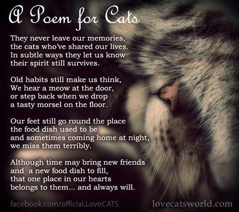Cat Love ~ http://www.pinterest.com/joysavor/cat-love/                                                                                                                                                      More