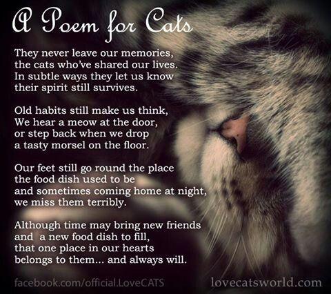 Cat Love ~ http://www.pinterest.com/joysavor/cat-love/                                                                                                                                                      More