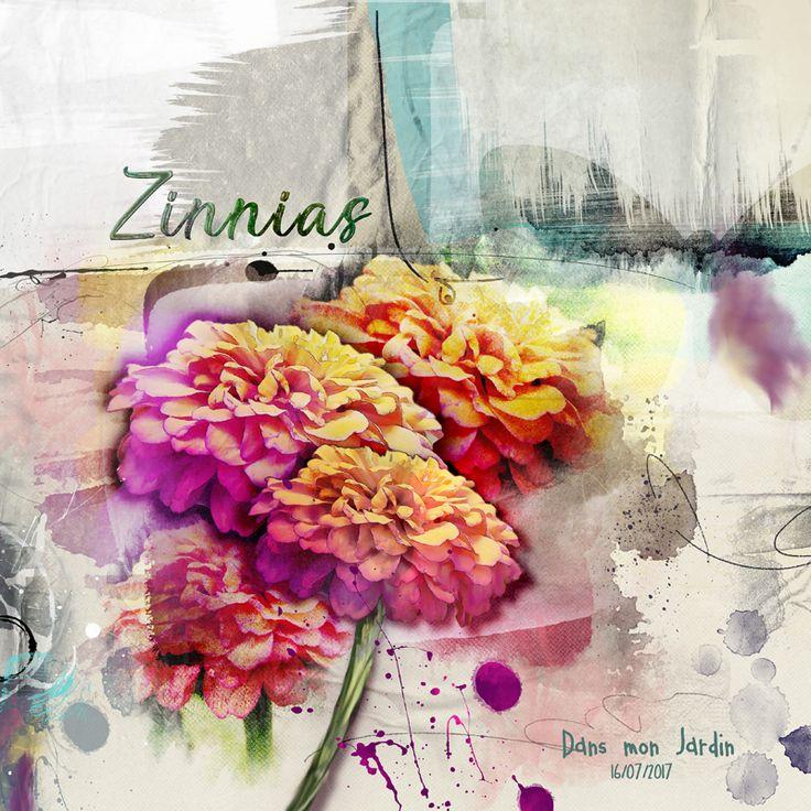 Zinnias - Anna Color challenge une page Arsty a partir de simple fleurs de Zinnias. je me suis bien amusée à faire cette page, en utilisant l'outil de liquéfaction de Photoshop, et l'outil peinture au doigt. c'est vraiment très amusant
