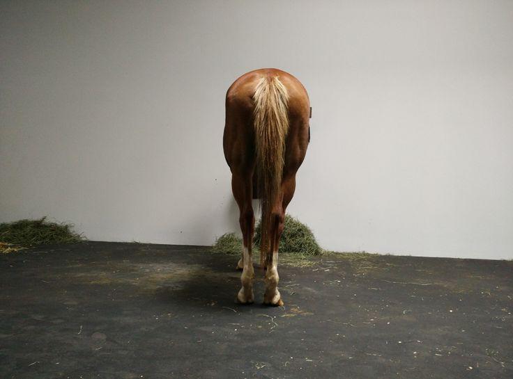 Jannis Kounellis's Iconic Untitled (12 Horses)