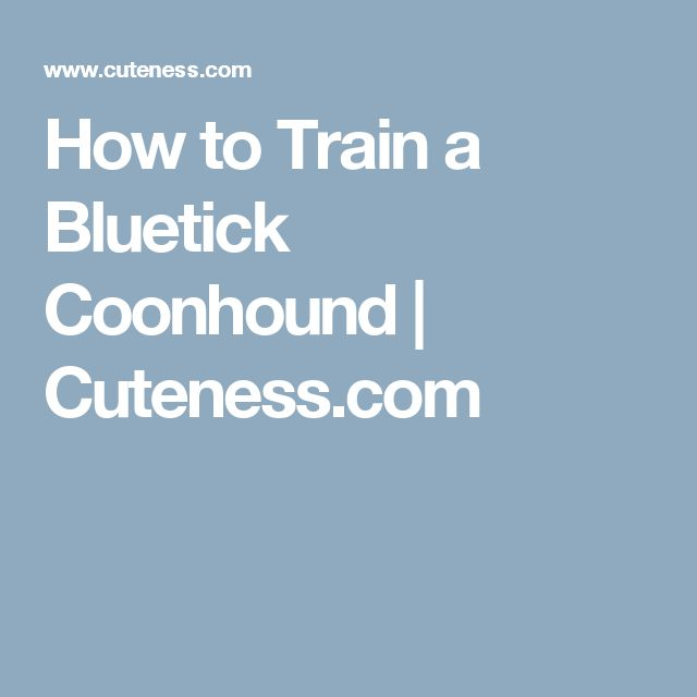 How to Train a Bluetick Coonhound | Cuteness.com