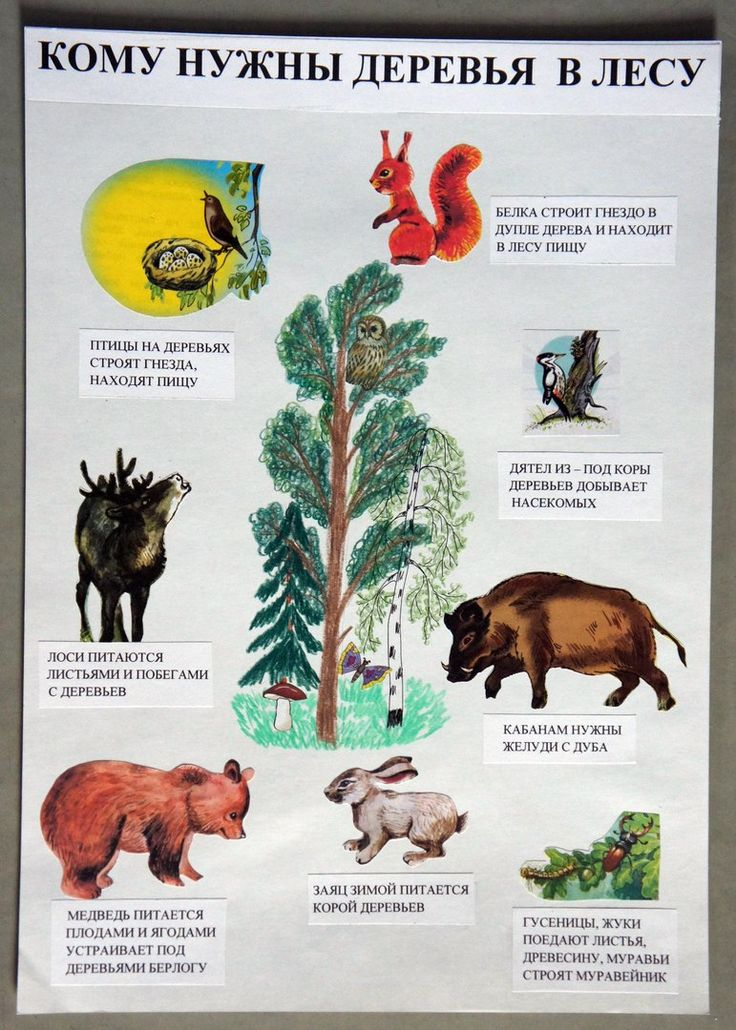 сходить зачем нужны деревья картинки смысл причина