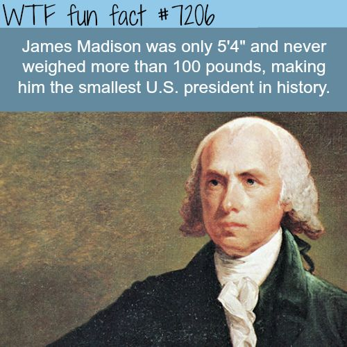 "wtf-fun-factss: ""James Madison, the smallest U.S. president - WTF Fun Fact """