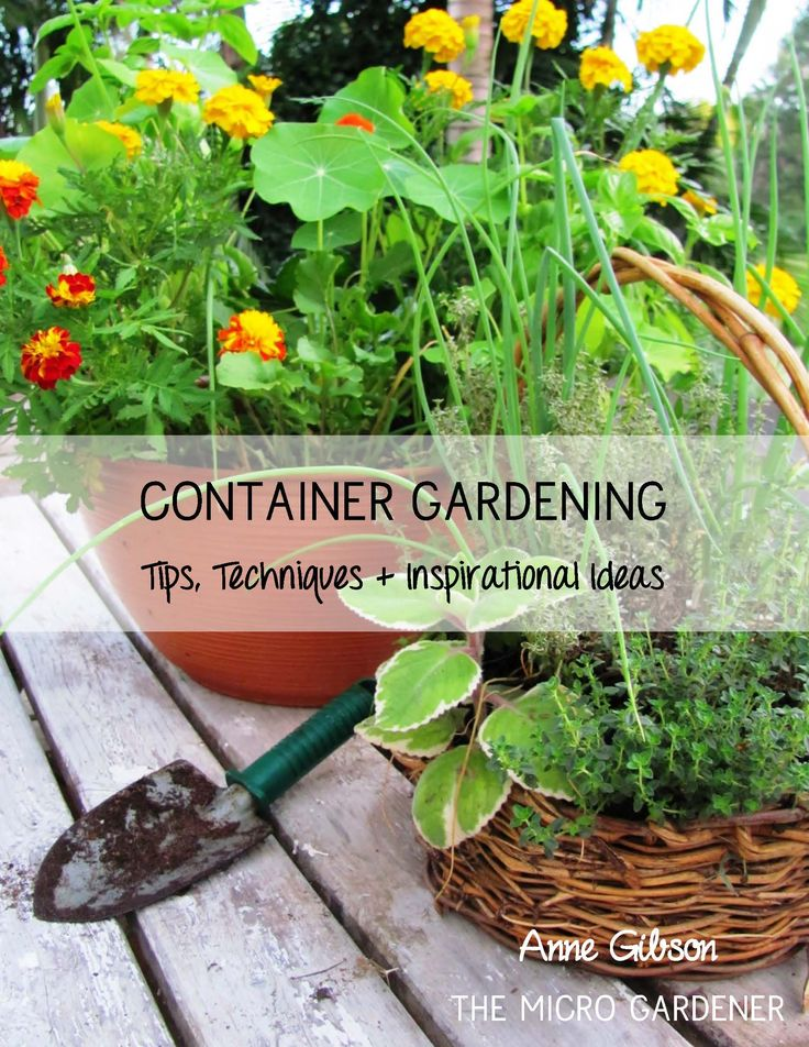 1597 best Gardening images on Pinterest Gardening Products and Ph