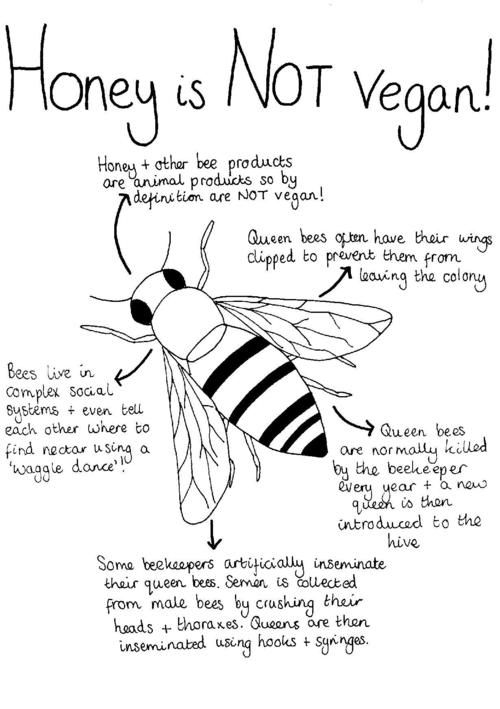 honey is not vegan! Yes, I've needed a way to show people this!!