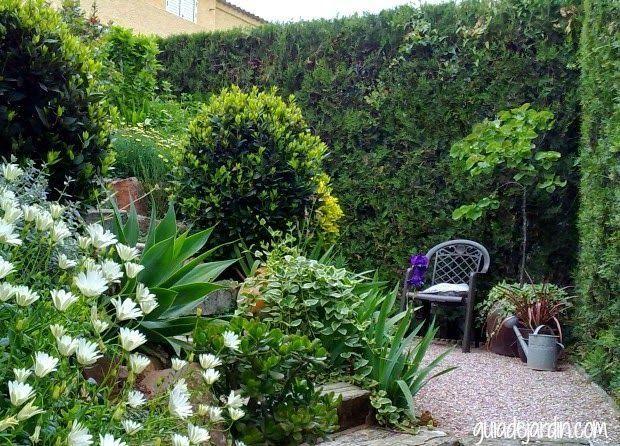 M s de 25 ideas incre bles sobre setos de jard n en for Como cuidar el pasto de mi jardin