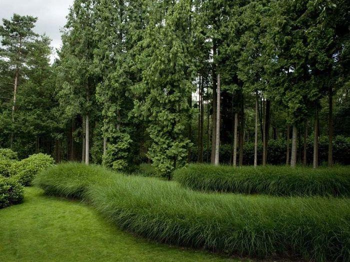 'Golven' zacht ogend gras door het gazon