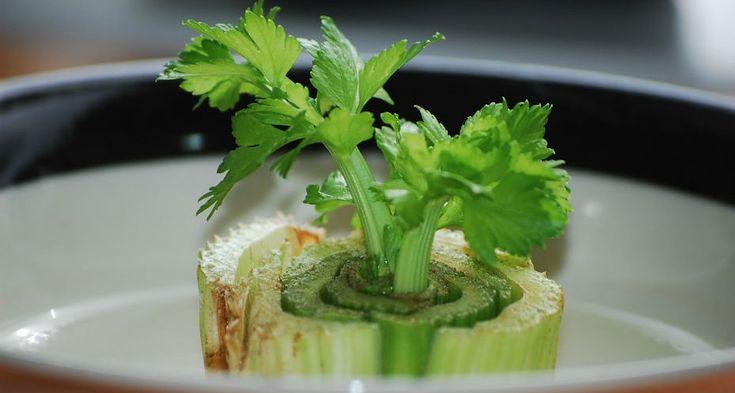 Veja 5 alimentos que se pode cultivar a partir de restos de comida. Fazer um cultivo orgânico a partir de sobras é simples e surpreendente!