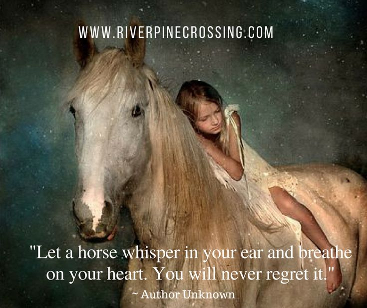 """""""Let a horse whisper in your ear and breath on your heart. You will never regret it."""" Author Unknown"""