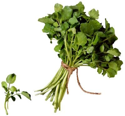 With a hefty dose of several vitamins and minerals, watercress is a nutritious addition to your diet. It's often eaten raw in salads, but it can also be cooked using many of the same methods you ...