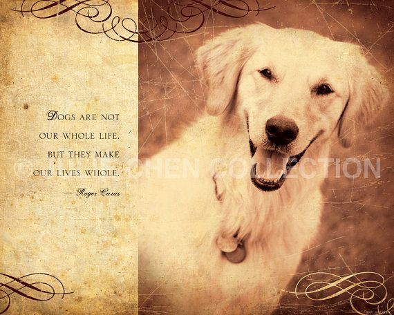 17 Best Ideas About Dog Poems On Pinterest
