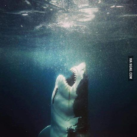 This must be the best picture of a white shark