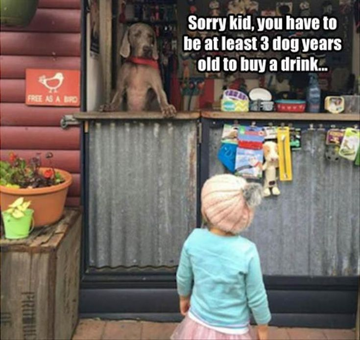 z-funny-pictures-2-6 funny pictures with captions pictures funny