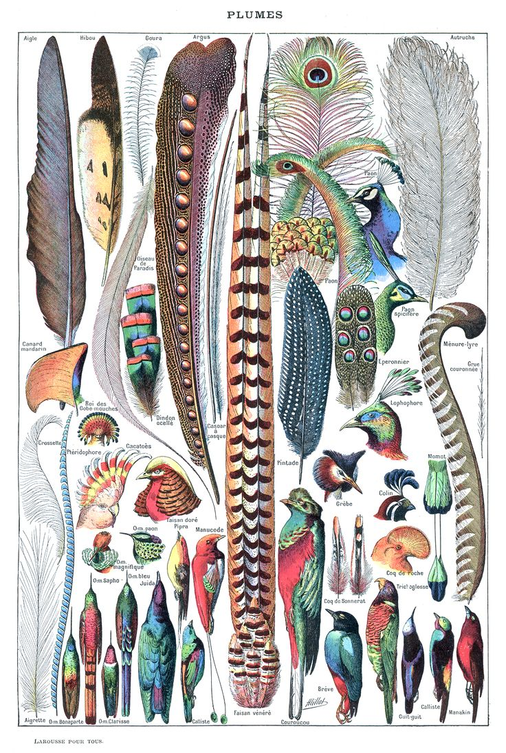 feathers4.jpg (1360×2024)