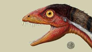 Meet one of the newest members on T-Rex's family  tree: Daemonosaurus. #seriouslyamazingExtinct, Daemonosaurus Jeffrey, Daemonosaurus Chauliodus Jpg, Jeffrey Martz, Fossils Fun, Science Nature, Daemonosaurus Face Jpg 666 419, Dinosaurs Deviled, Animal Science